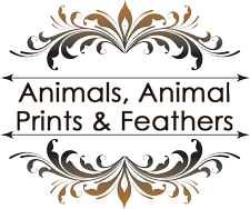 Animals, Animal Prints & Feathers