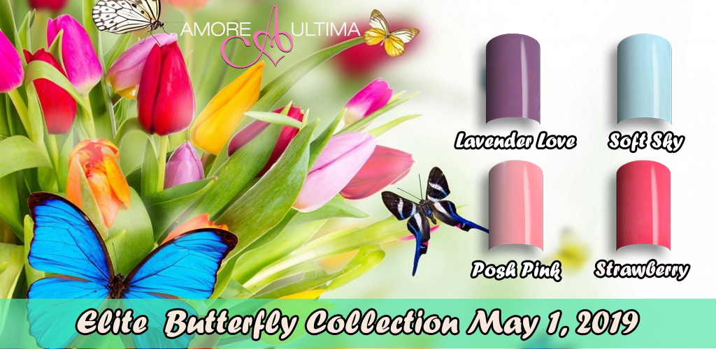 Elite Butterfly Collection